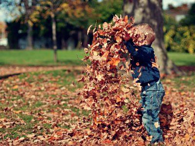 leaf-boy